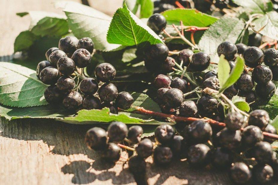 Hranljiva in zdravilna vrednost aronije